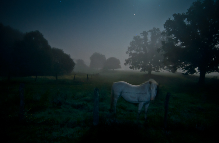 ghostly horse visit