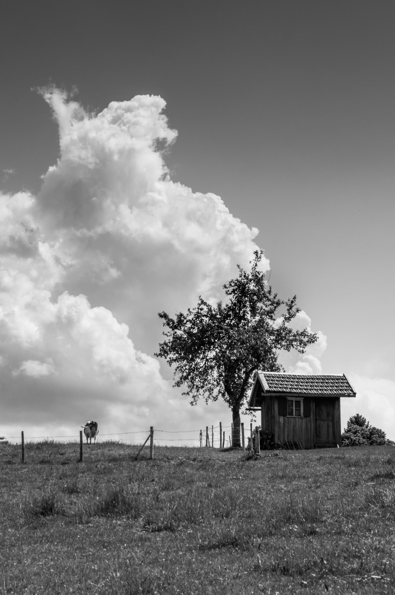 clouds, cow and shed