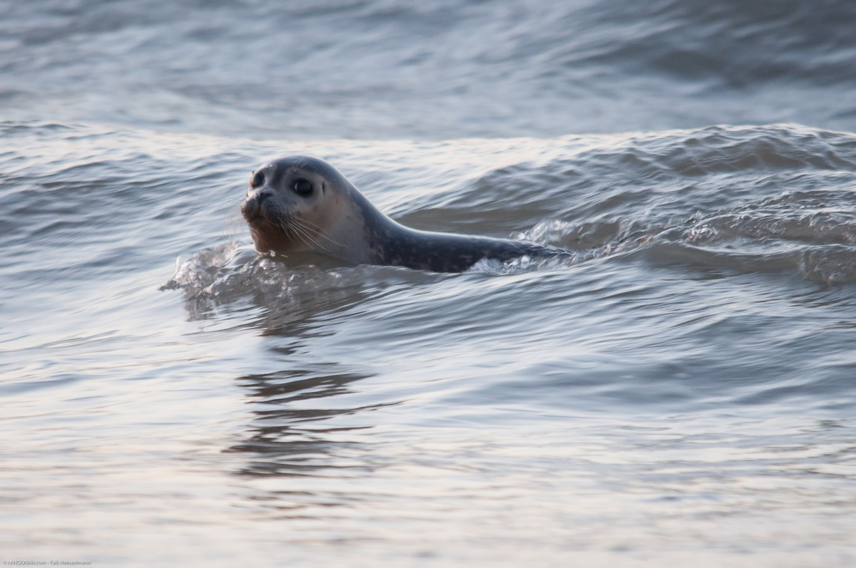 new years seal