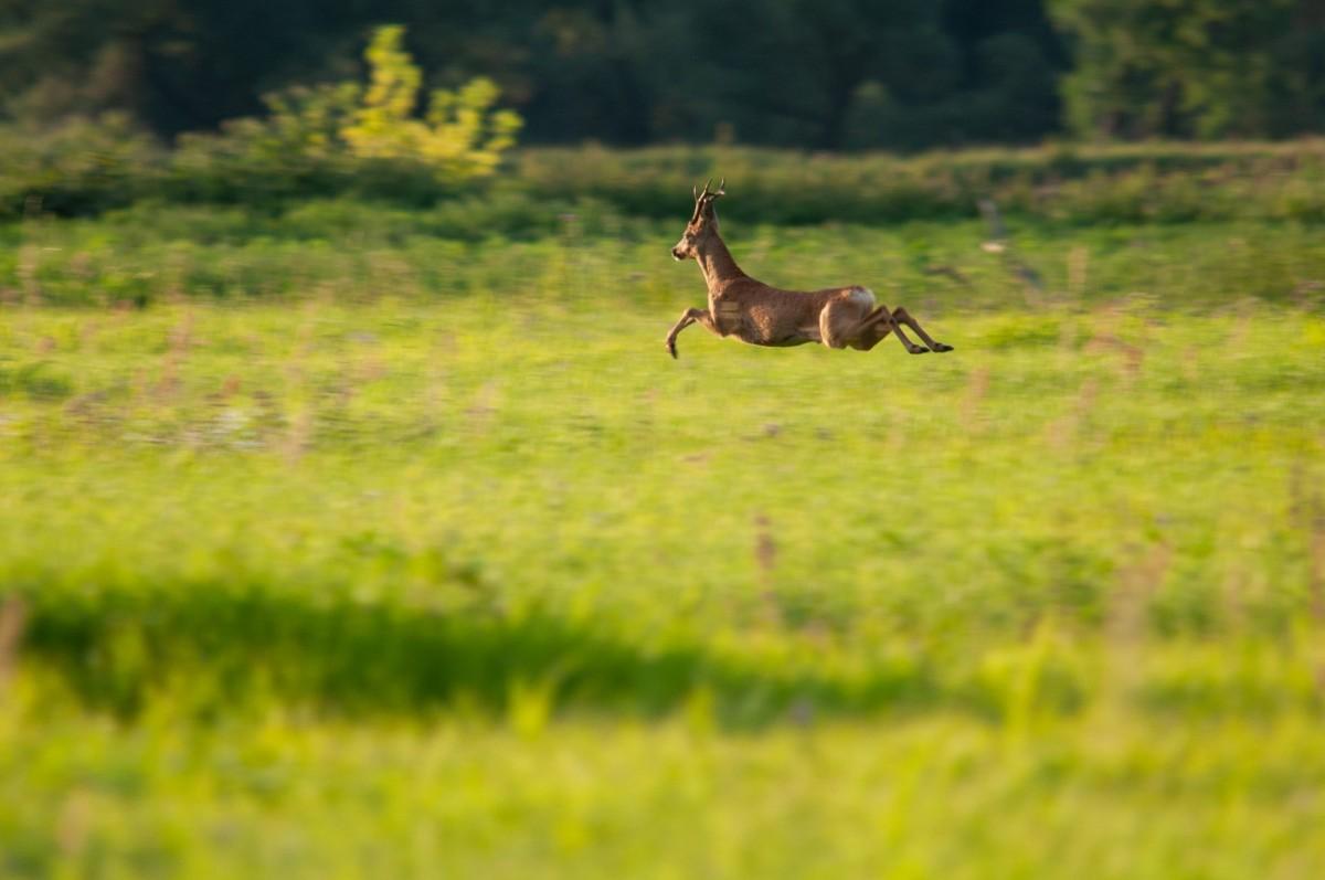 bambi jump